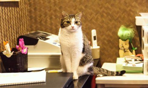 店番をする猫の画像