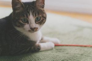 最強の営業猫
