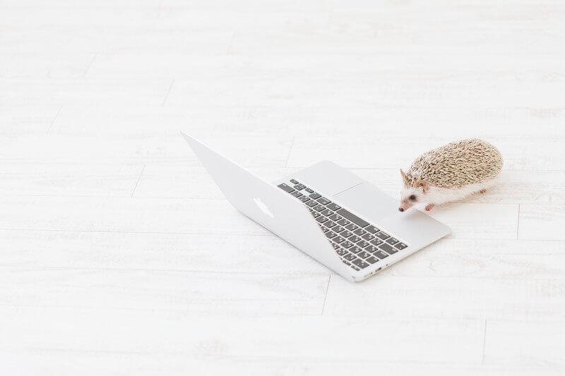 作業する可愛いハリネズミ