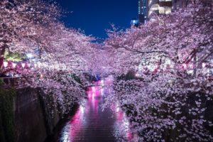 桜の散る季節に退職