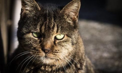 怒ると怖い猫