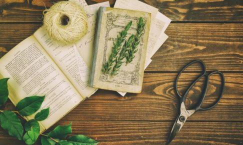 観葉植物からカビ